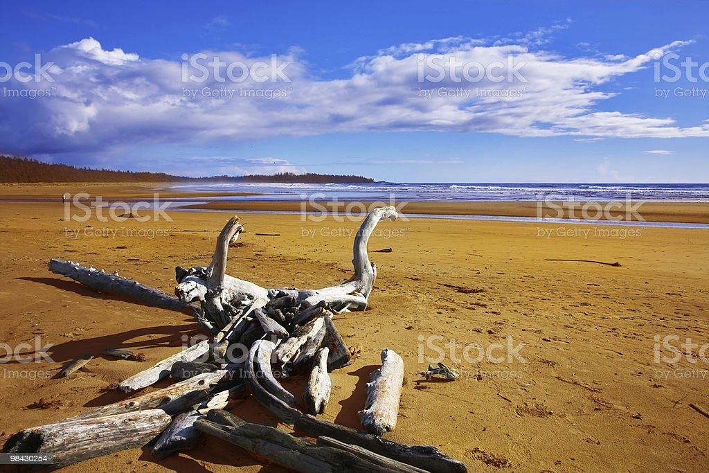 Ocean coast on island Vancouver, logs and dry trees royalty-free stock photo