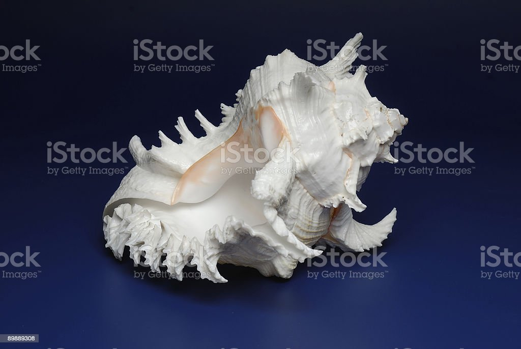 Ocean cockleshell 3 royalty-free stock photo