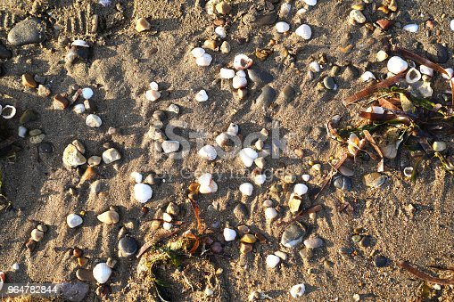 Ocean Debris Of Drift Wood Smooth Rocks And Shells On Sand Stock Photo & More Pictures of Abstract