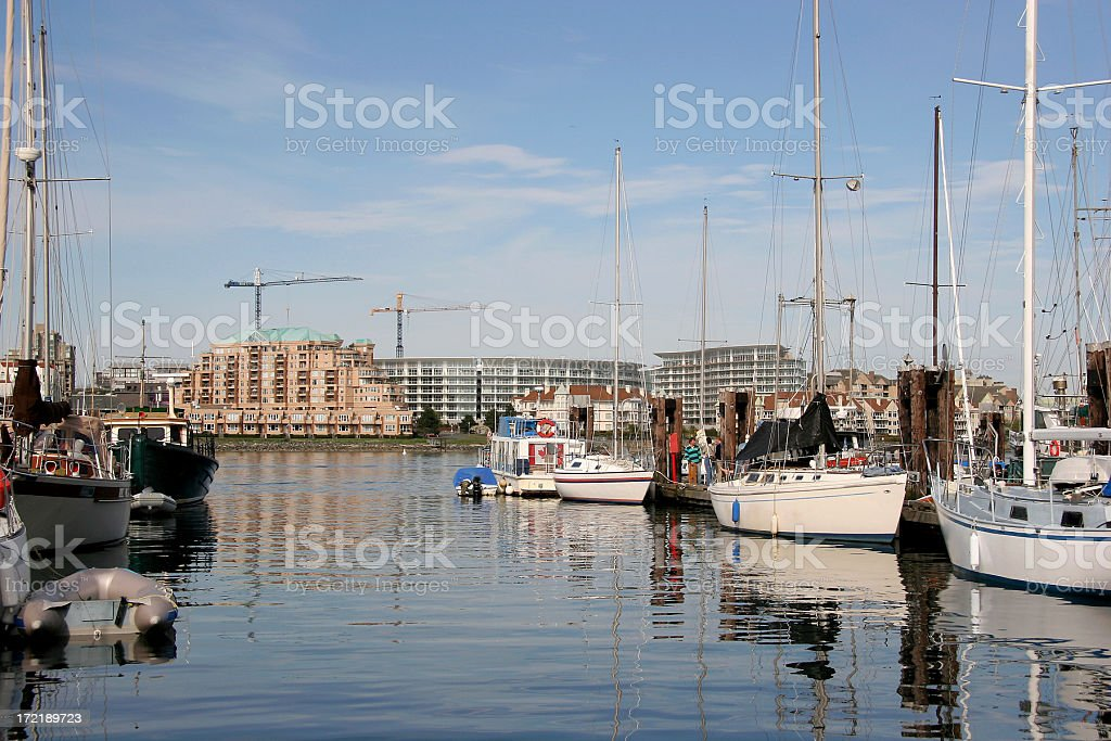 Ocean Dwellers an Land Lubbers. royalty-free stock photo