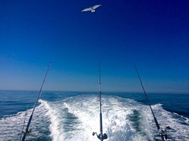 Ocean Fishing Summer Day on the Open Ocean Ocean Fishing Summer Day on the Open Ocean fishing stock pictures, royalty-free photos & images