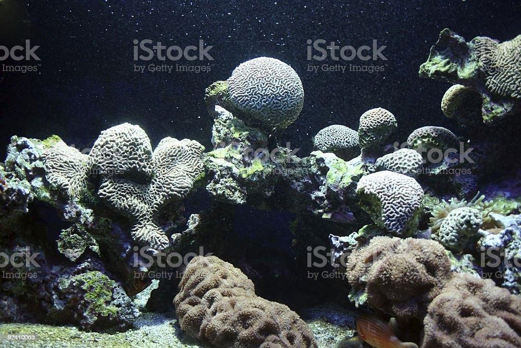 Ocean flora stock photo