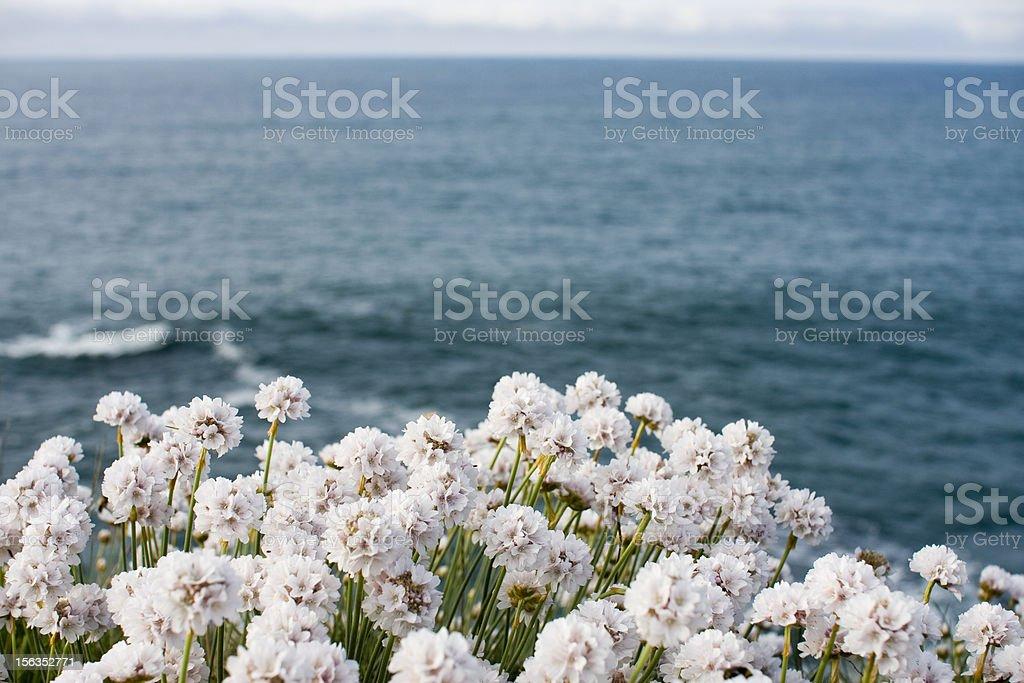 Ocean Flowers. royalty-free stock photo