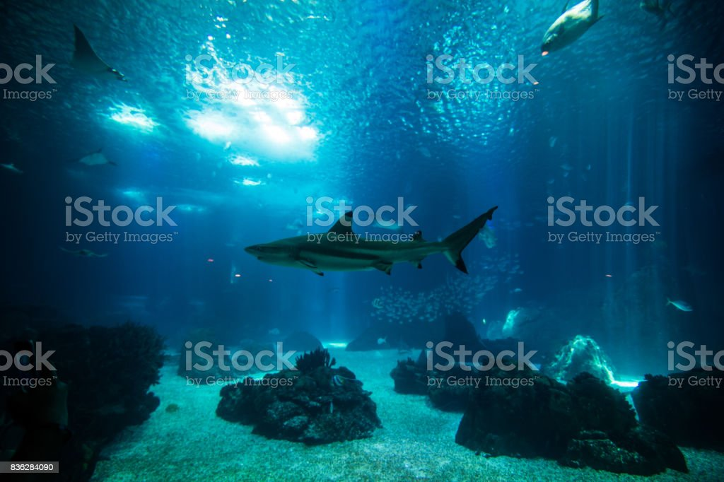 Ocean giant fish world in aquarium for observation. stock photo