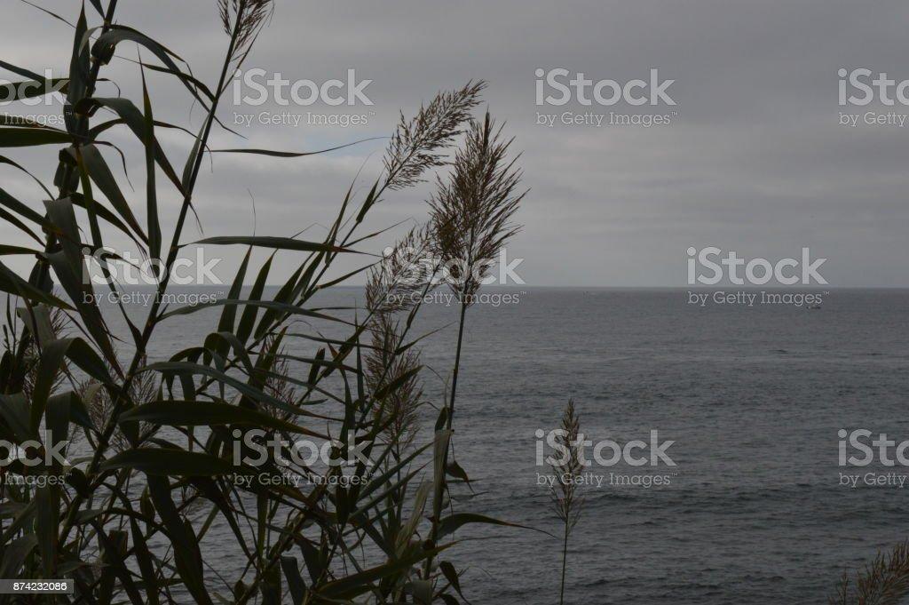 Ocean Grass stock photo