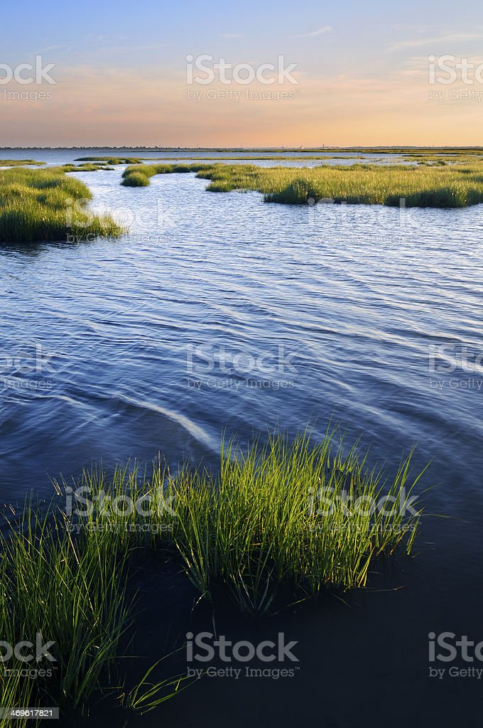 Ocean Inlet with Salt Marsh Grasses stock photo
