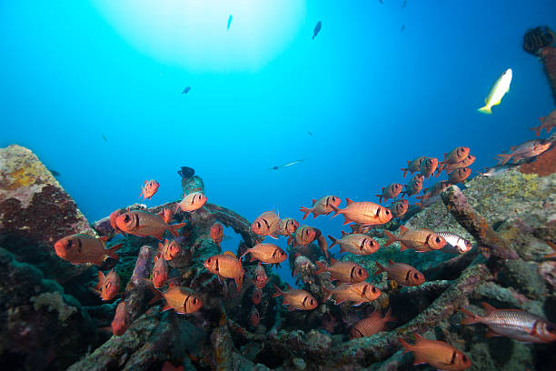ocean marine life - artificial reef stock pictures, royalty-free photos & images