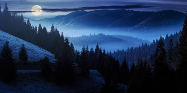 ocean of fog in forested valley at night stock photo