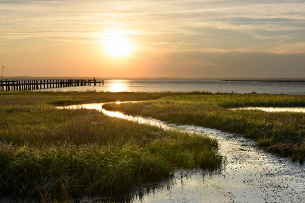 Ocean salt marsh with sea grass and dock at sunset stock photo