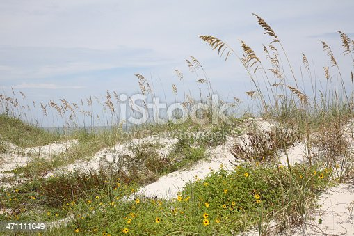 istock Ocean, Sand Dunes And Sea Grass 471111649