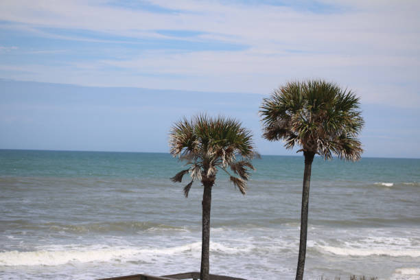 Ocean scene with two palm trees in foreground_copyspace stock photo