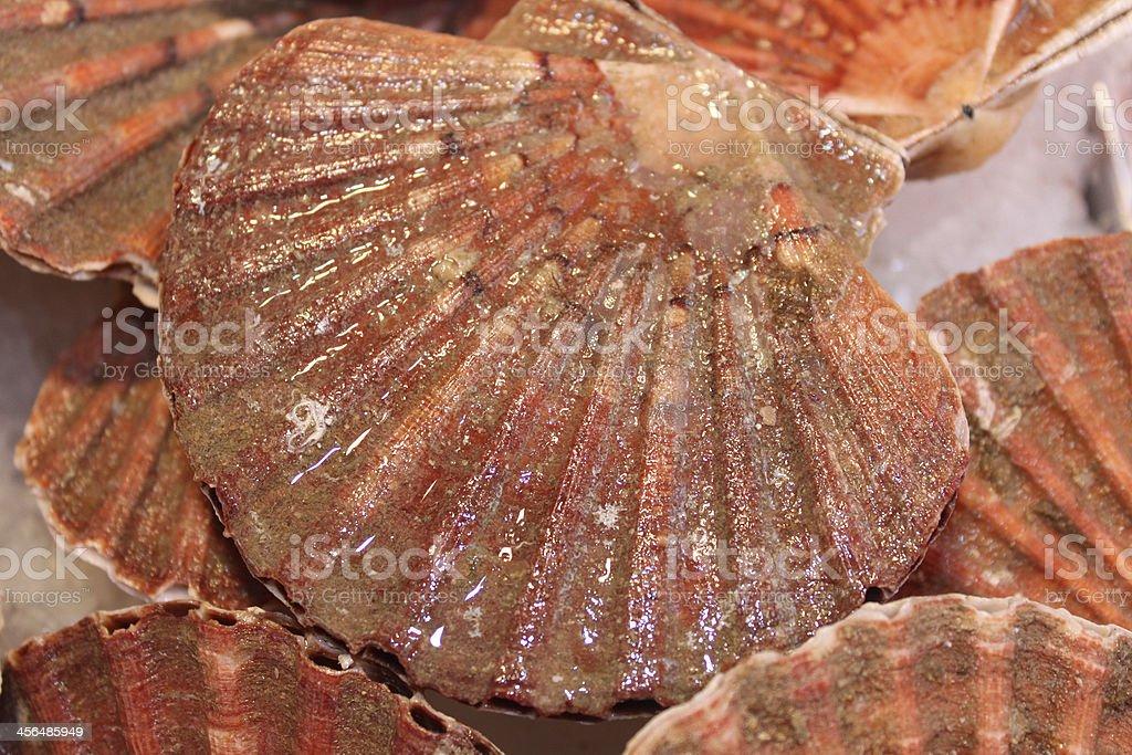 Ocean-shell – Foto