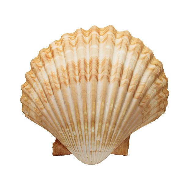 Ocean shell stock photo