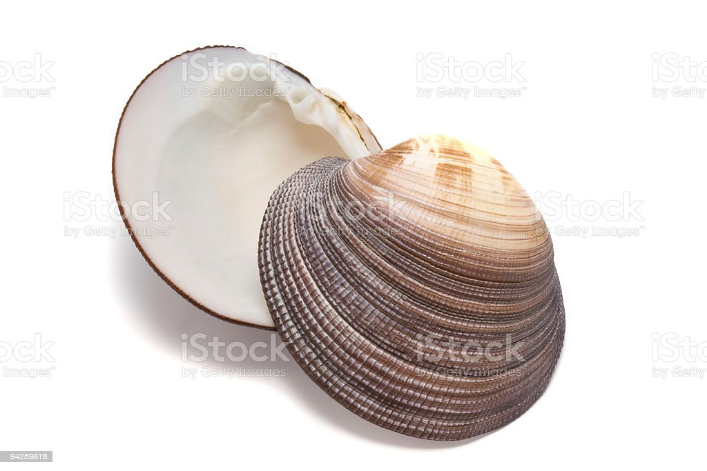 Ocean shell royalty-free stock photo