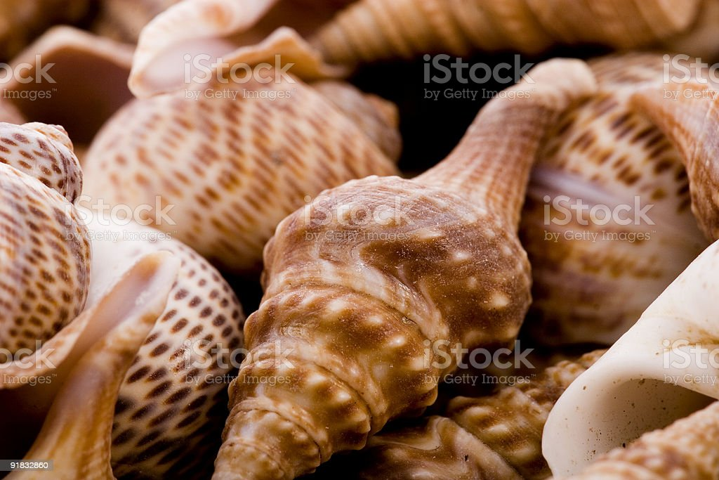 ocean shells royalty-free stock photo