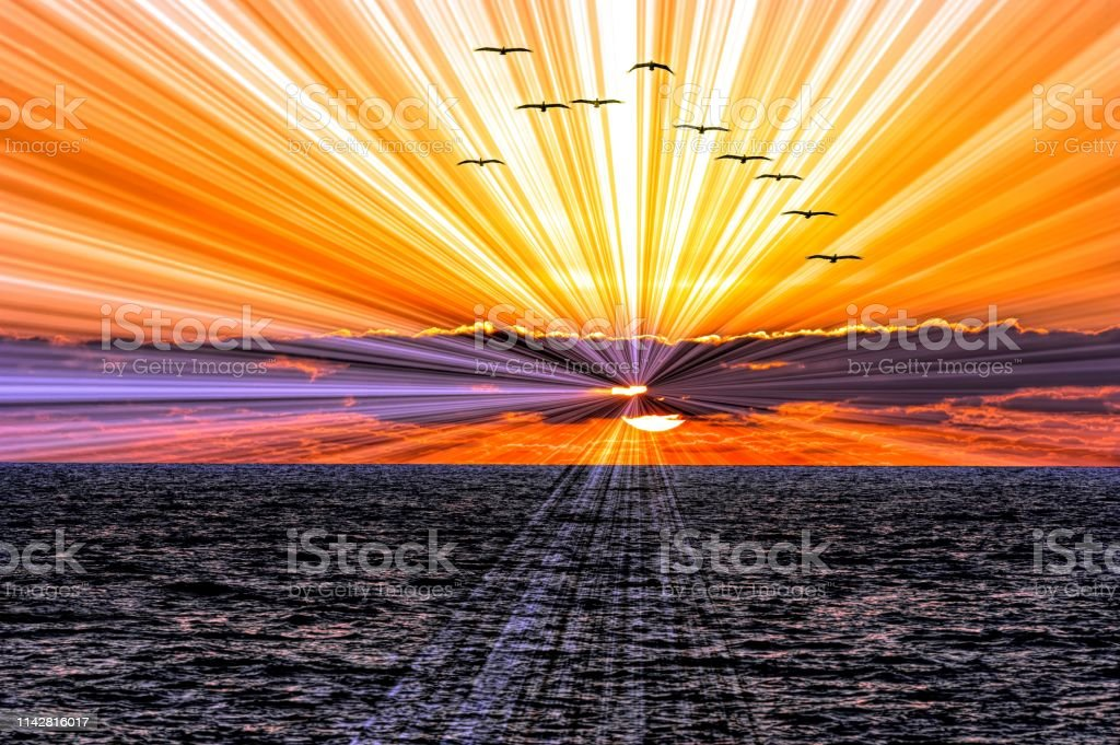 Ocean Sunset Birds – Foto