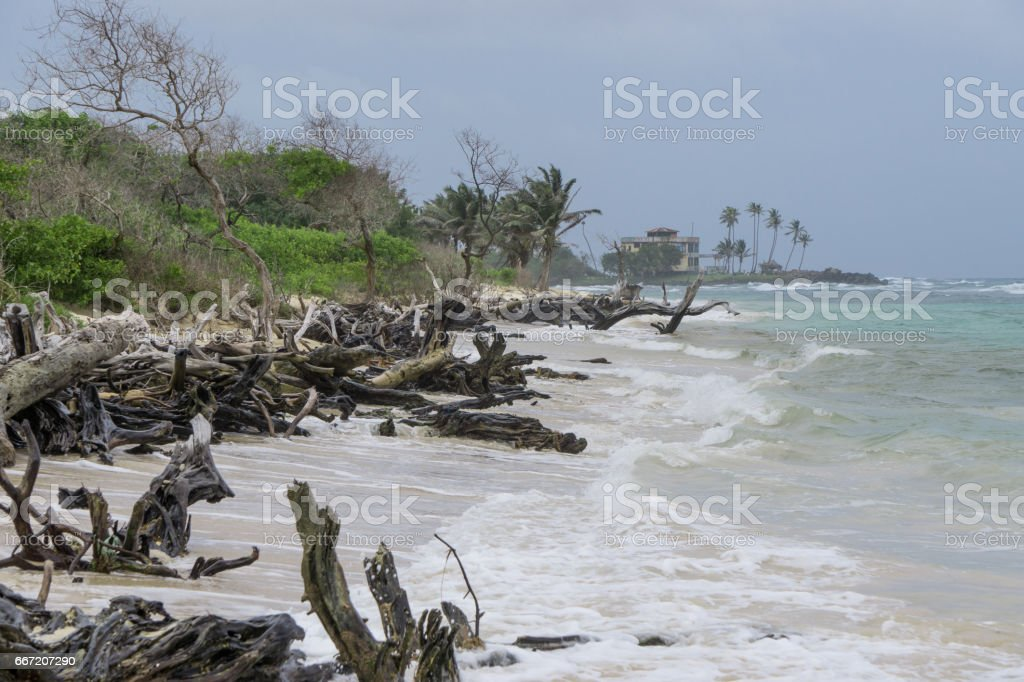 Ocean Tree Timber on the beach royalty-free stock photo