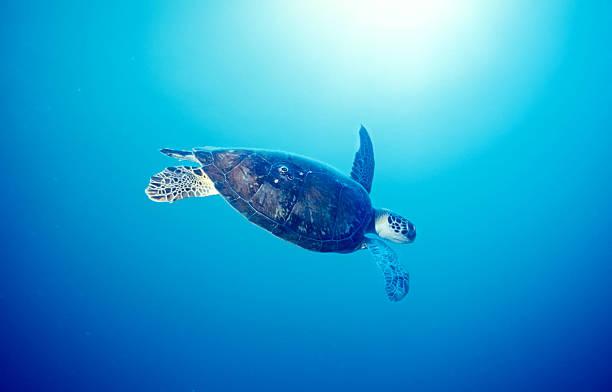 Ocean turtle – Foto