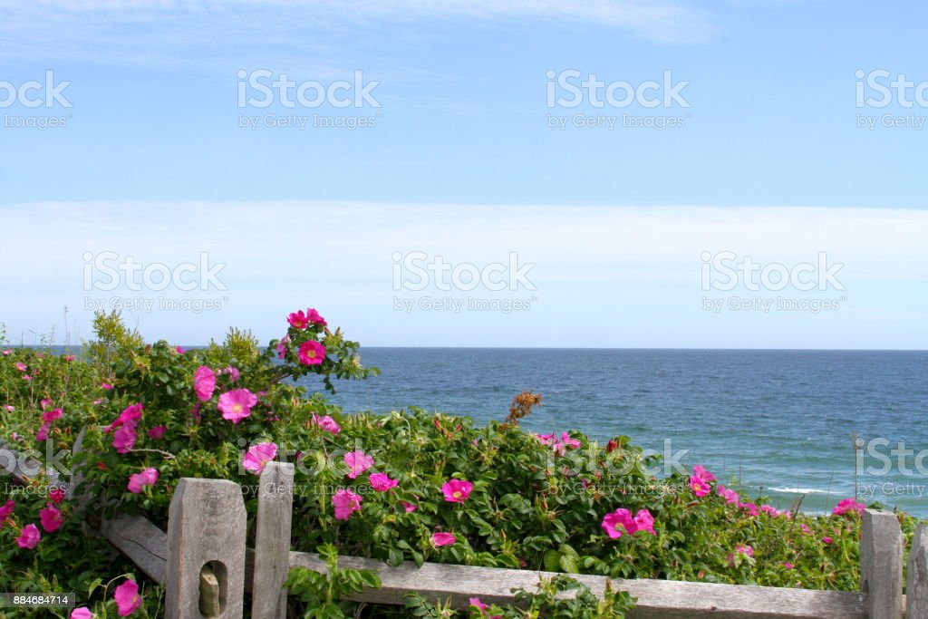 Ocean view on the Cape Cod National Seashore stock photo