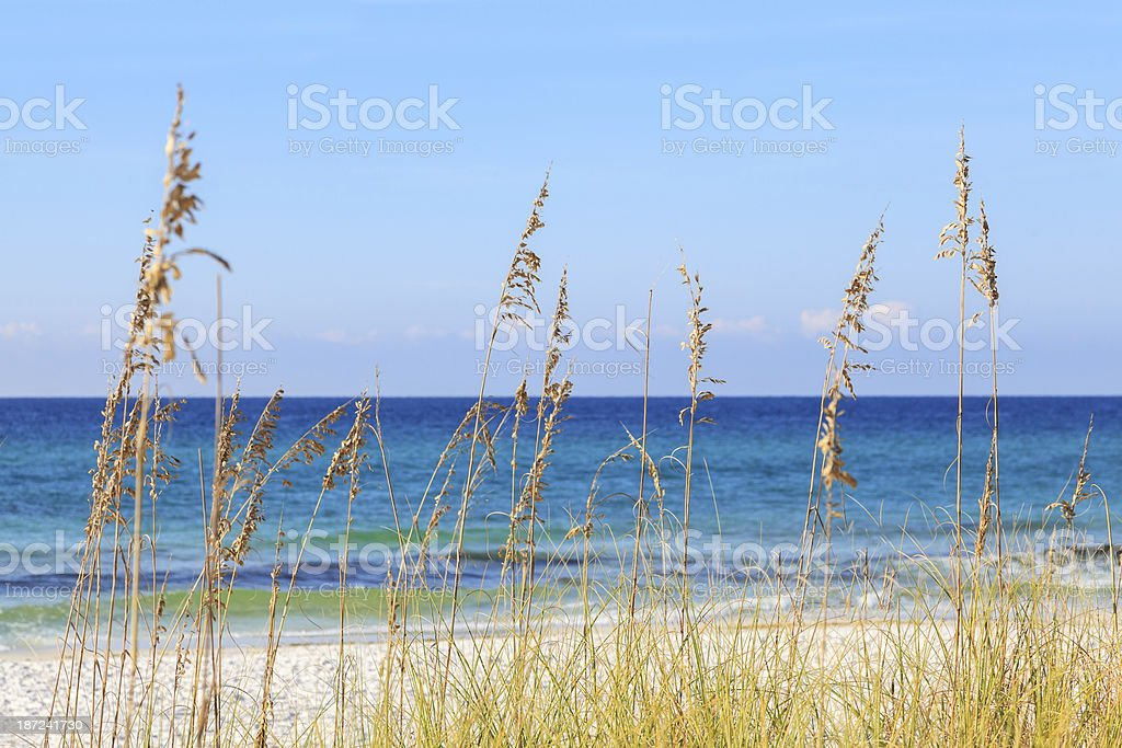 Ocean view with beach grasses stock photo