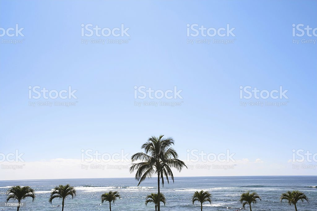 Ocean with coconut Palms stock photo