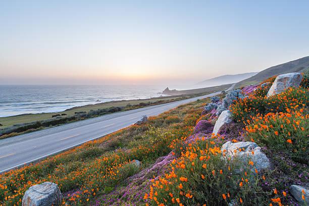 fleurs sauvages dans le big sur, californie - source naturelle photos et images de collection