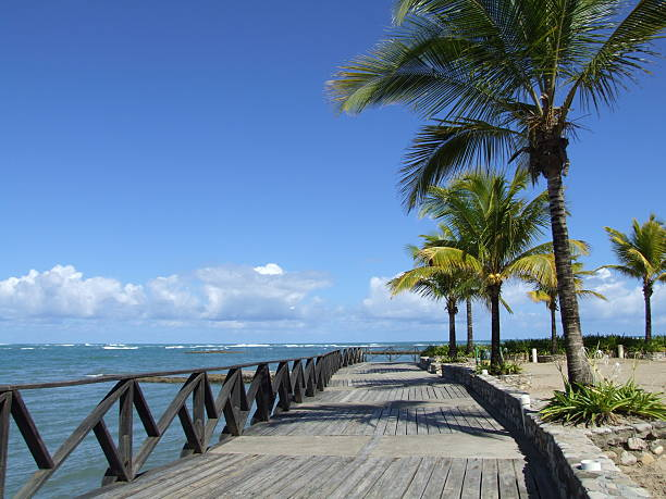 ocean-side boardwalk with palm trees - belkindesign stock pictures, royalty-free photos & images