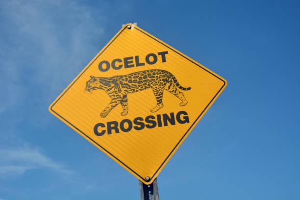 ocelot crossing road sign - ocelot foto e immagini stock