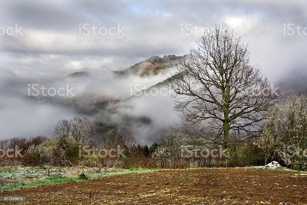 Ochagavia Nieblas - foto de stock