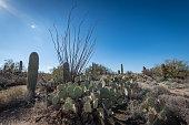 The ineffable beauty of the Desert