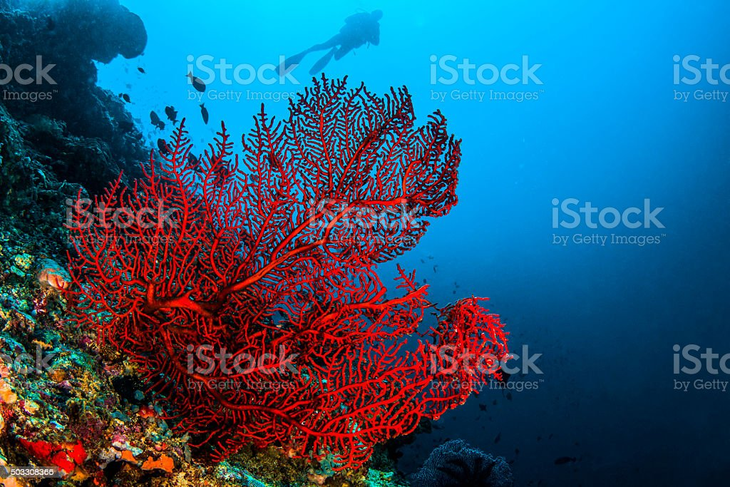 Octo coral stock photo