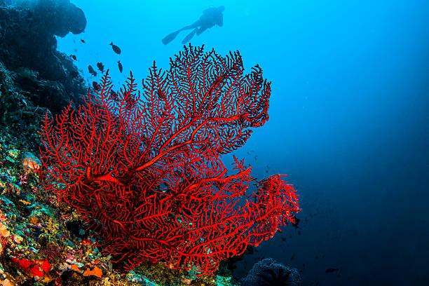 Octo coral stock photo