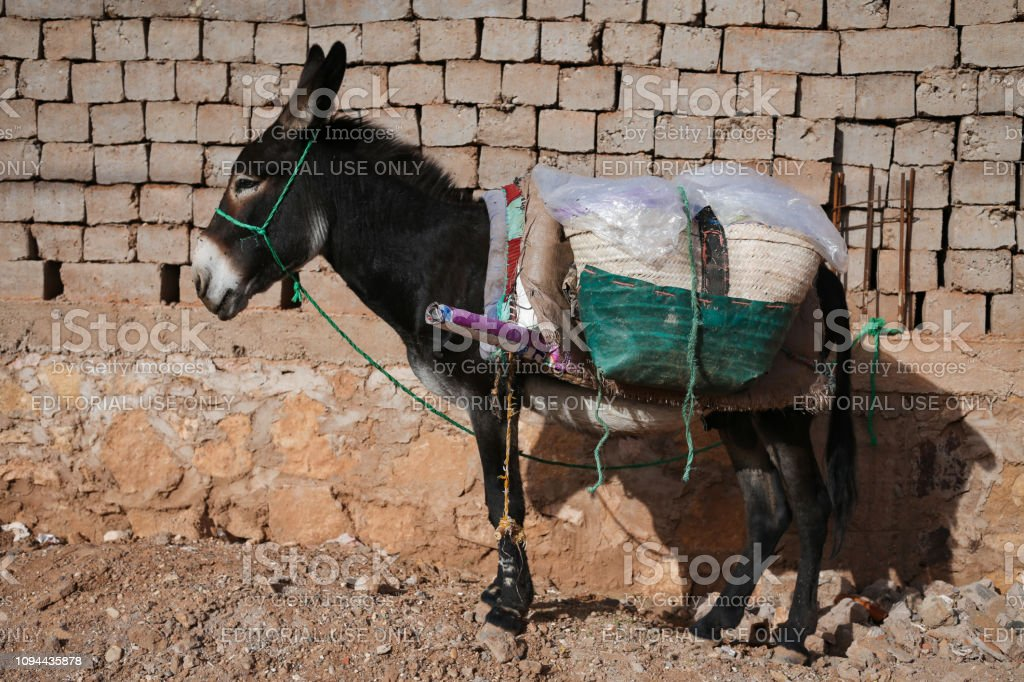 October 5, 2018 'u2013 Ait-Ben-Haddou, Morocco: Donkey standing on a street in Ait-Ben-Haddou, Morocco. stock photo