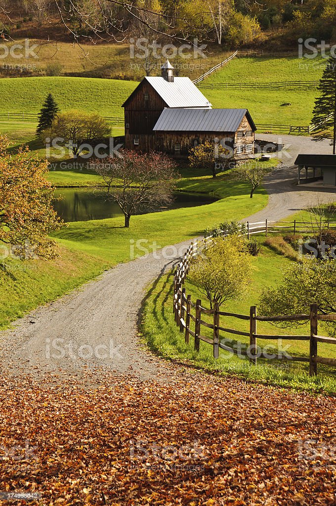October Fallen Leaves stock photo
