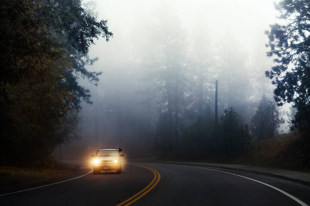 October fog in Washington. Dog looking out of moving car stock photo