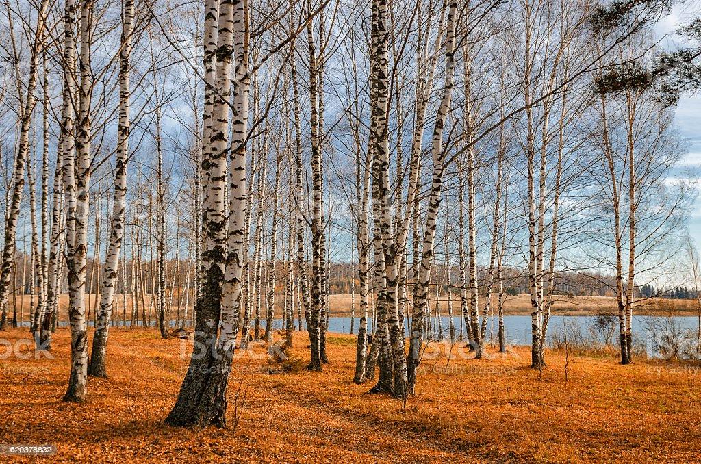 October, Golden Autumn zbiór zdjęć royalty-free