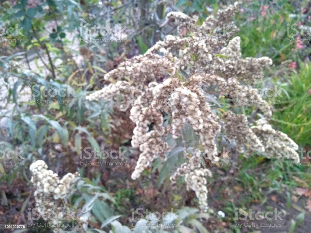 Photo libre de droit de Arrangement De Fleurs De Jardin ...