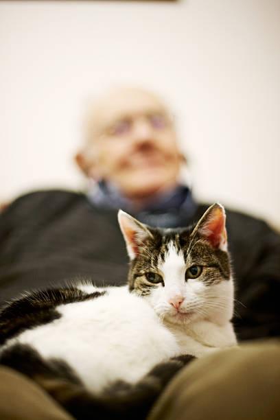 Octogenarian sleeping on sofa with cat in lap picture id181857782?b=1&k=6&m=181857782&s=612x612&w=0&h=95 ri4halwz2sdu6xdpwiciqhskb vxfrmsnaixwpgo=