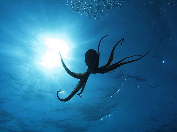 octopus and sun - octopus stock pictures, royalty-free photos & images