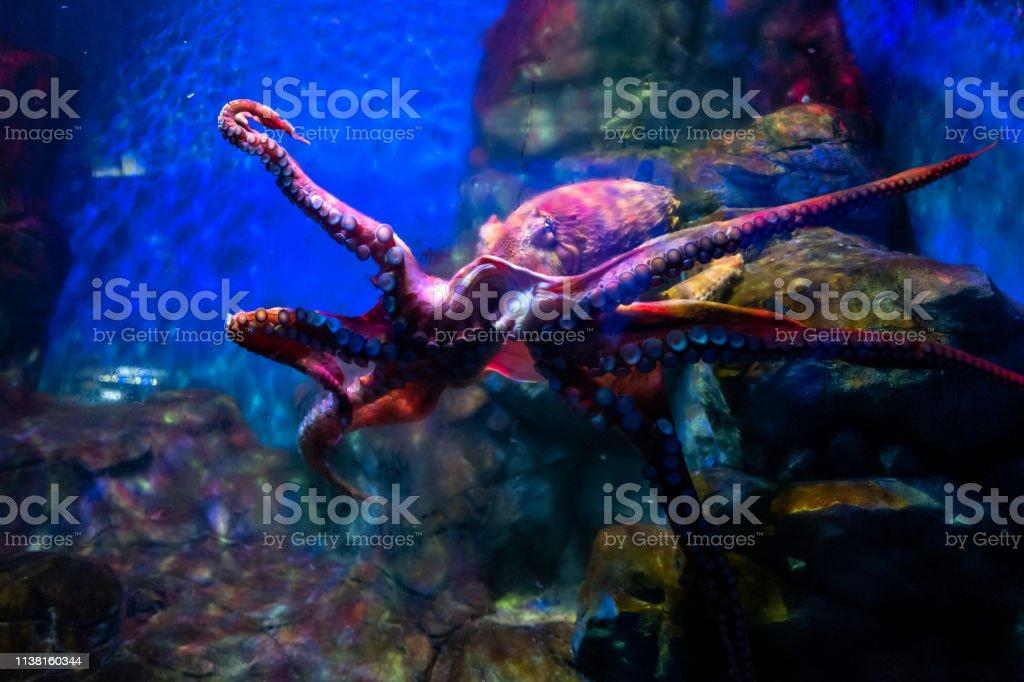 Oktopus in Langkawi Waterworld – Foto
