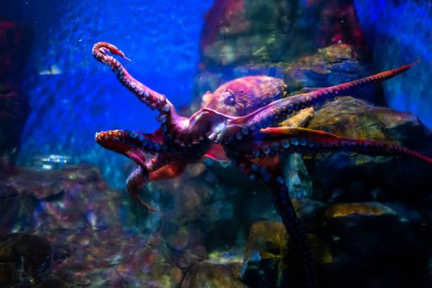 Octopus at Langkawi Waterworld stock photo