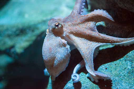 Octopus Stock Photo - Download Image Now