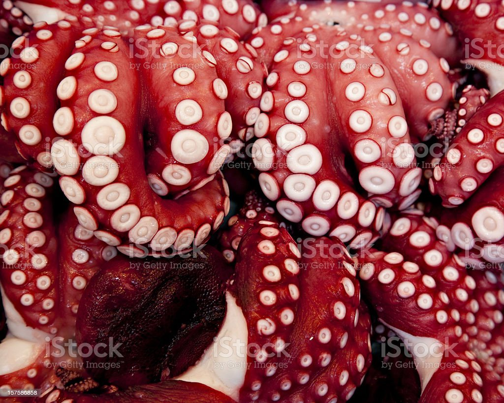 octopus tentacles stock photo