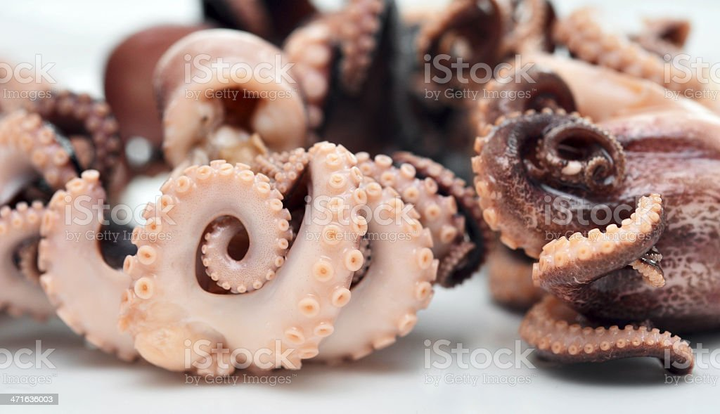 octopuses royalty-free stock photo