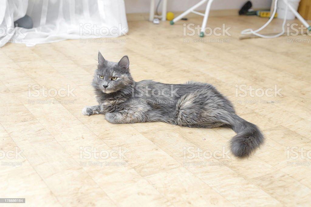 Odd Cat royalty-free stock photo