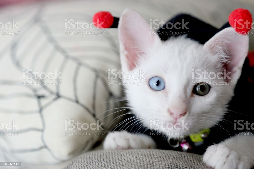 Seltsame Augen Katze – Foto
