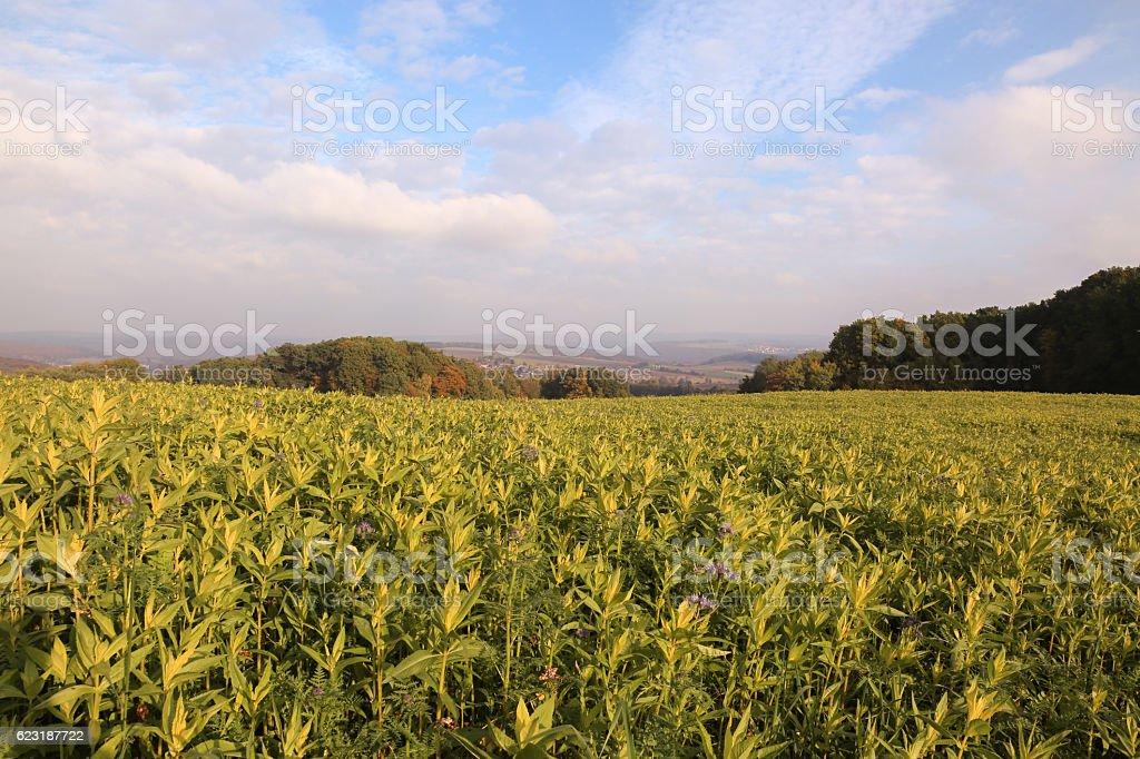 Odenwald stock photo
