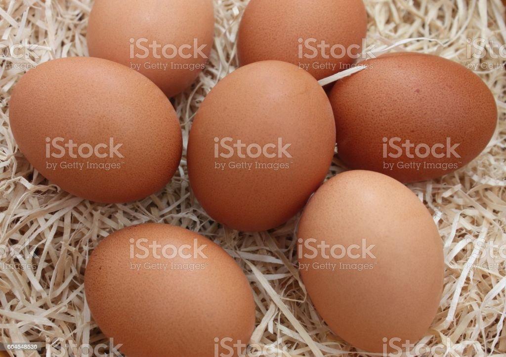 Oeufs de poule sur lit de paille royalty-free stock photo