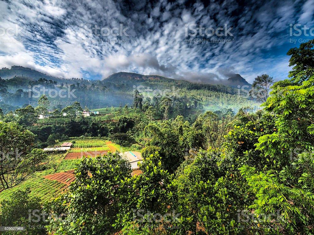 HDR of foogi morning above Nuwara Eliya in Sri Lanka stock photo
