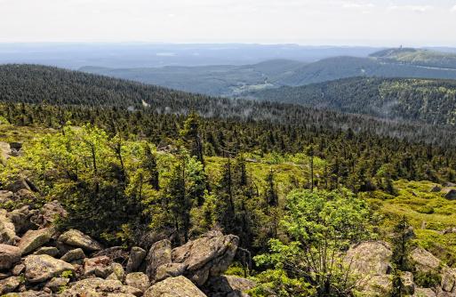 HDR of Harz National Park landscape (Germany)